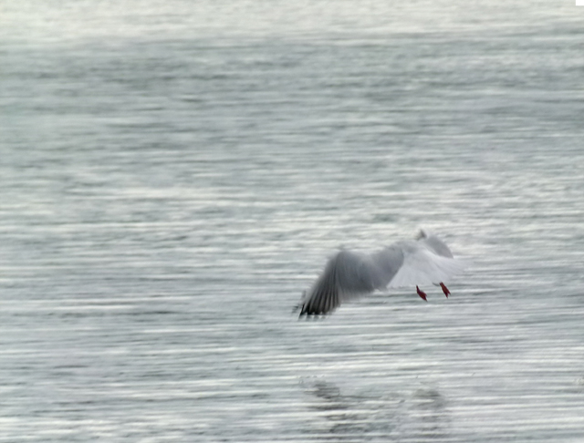 a seagull landing on water