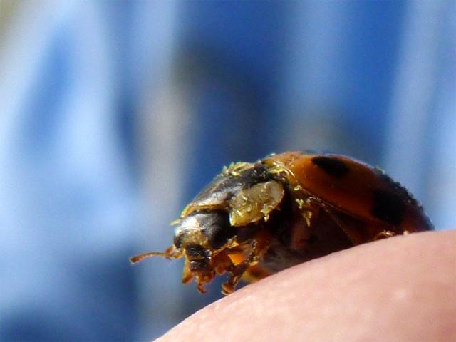 a ladybug on my finger