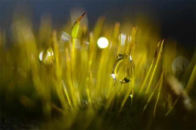 Moss & Ice