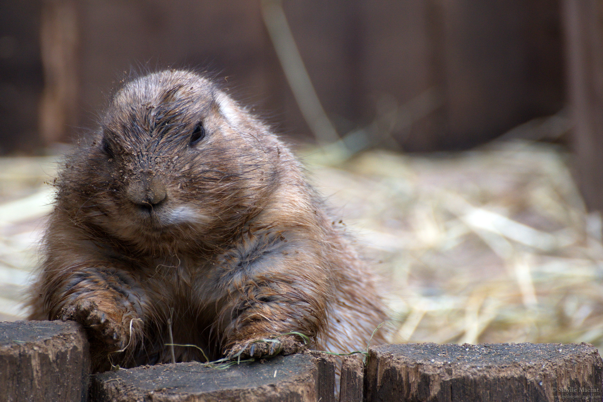Groundhog Work
