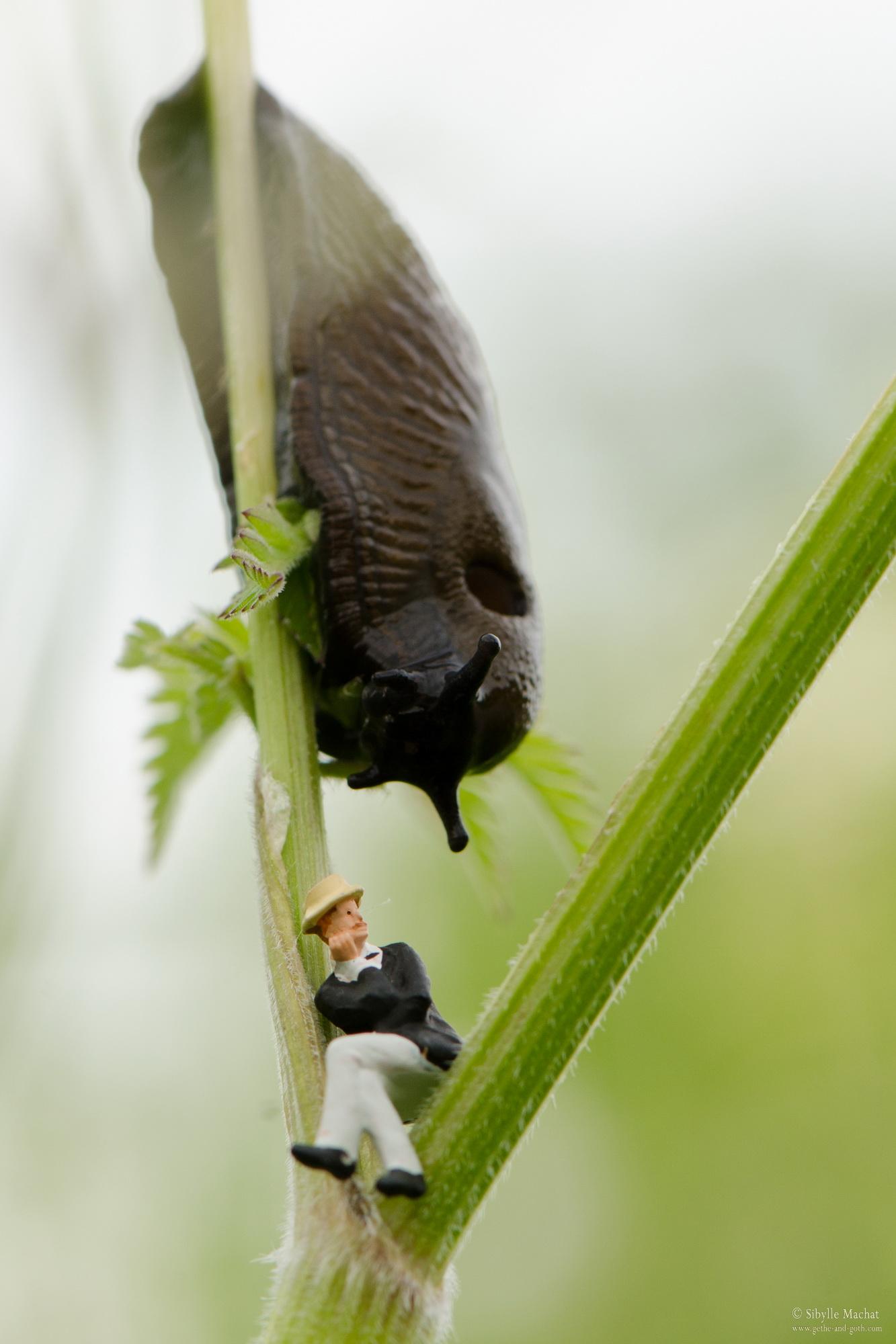 The Slug is Coming for You