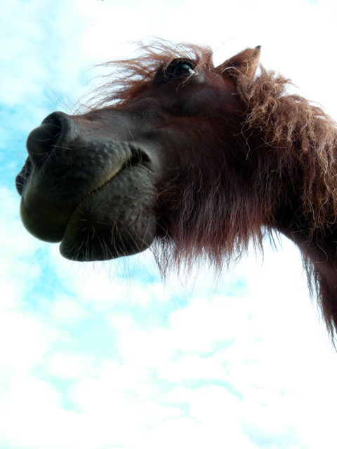 A horse head from below