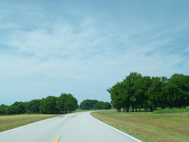 road with trees