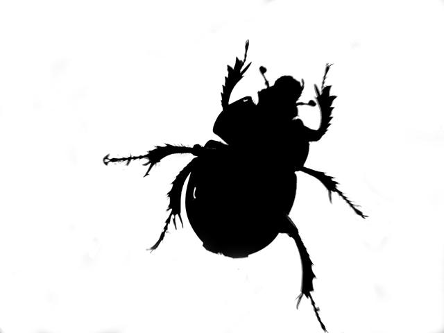 Anoplotrupes stercorosus