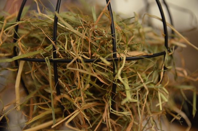 hay in a feeder