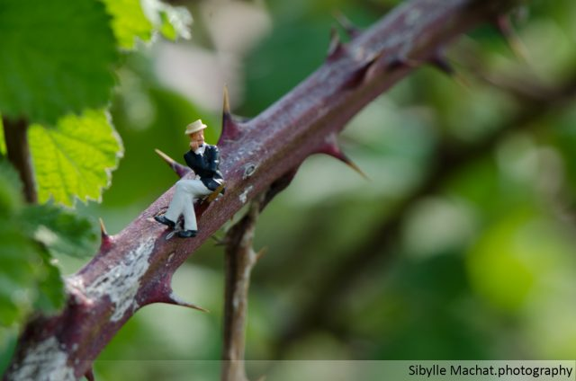 tiny person on a thorny branch