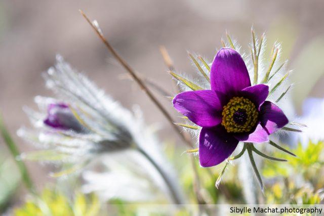 a purple plant